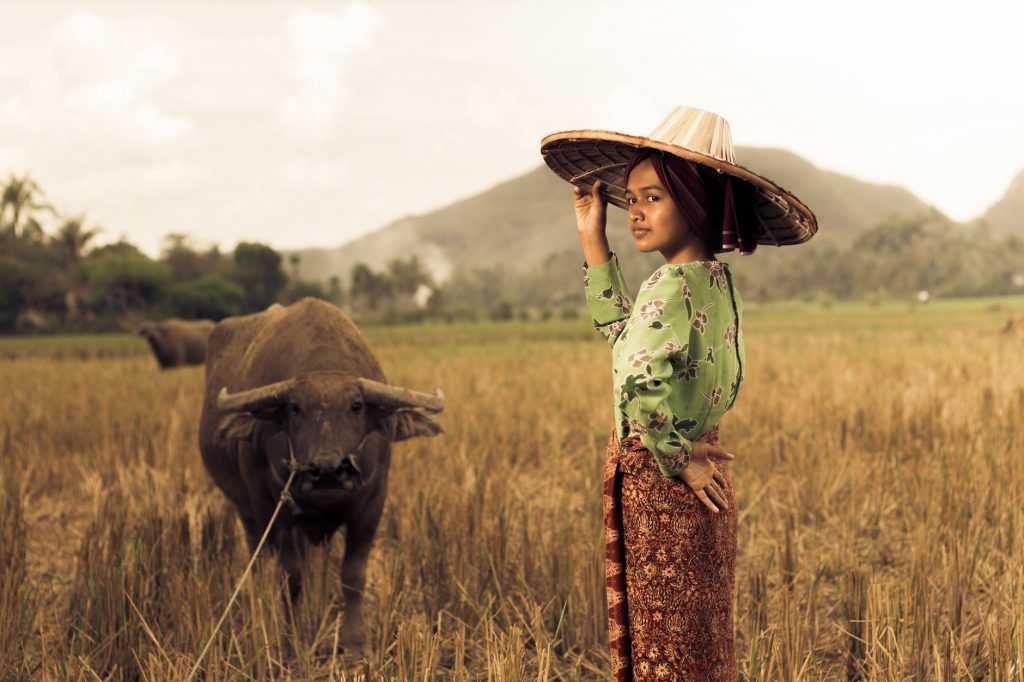 Banteng identik dengan kehidupan agraris masyarakat Indonesia