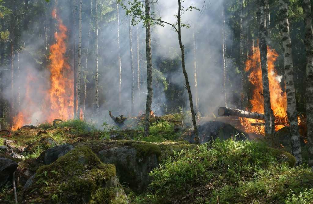 SIG dapat digunakan untuk merespons cepat terhadap kebakaran hutan di daerah terpencil