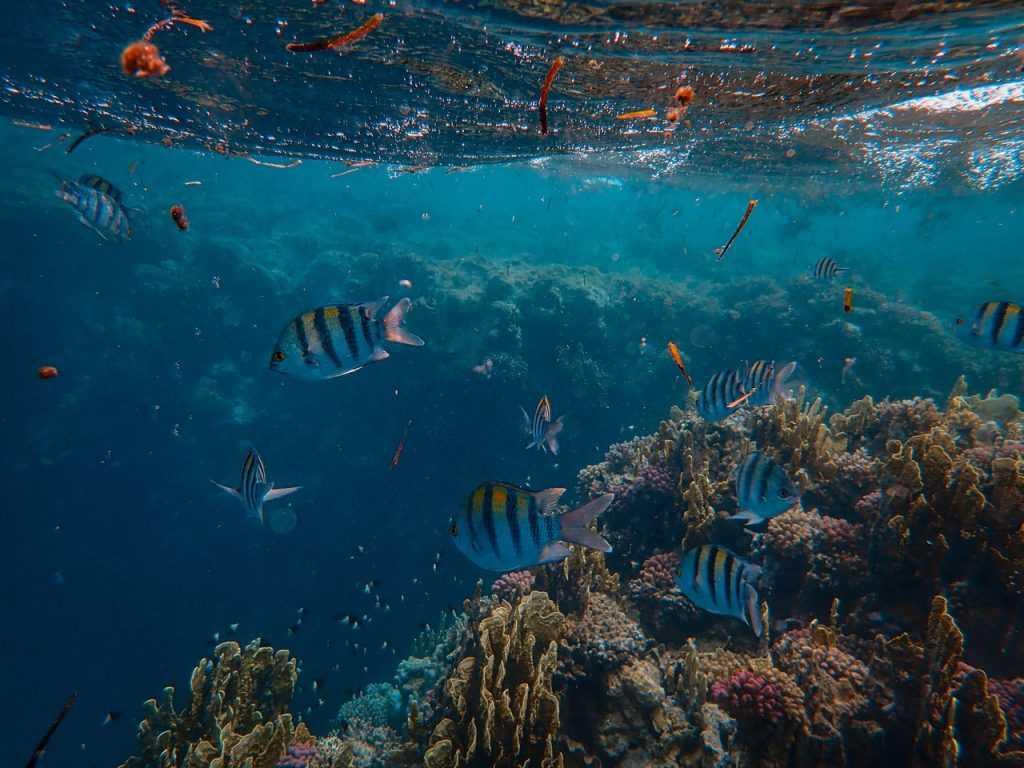 Peningkatan kadar keasaman perairan dapat mengurangi biodiversitas maritim di suatu wilayah