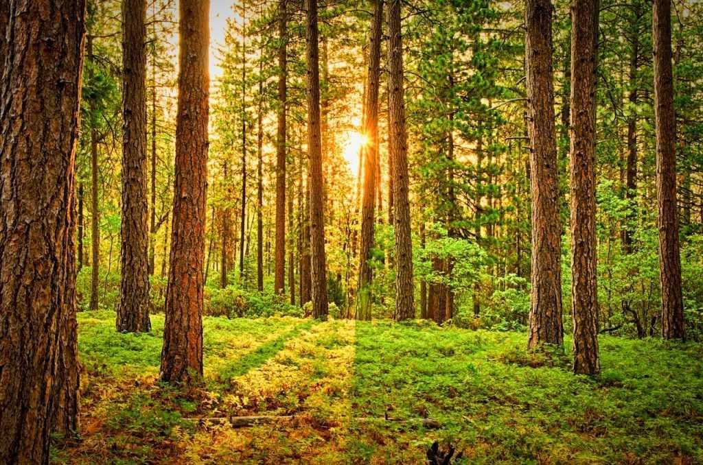 Biodiversitas memberikan jasa lingkungan yang banyak