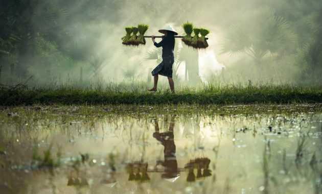 Pertanian yang terletak di daerah subur adalah contoh fisis determinis