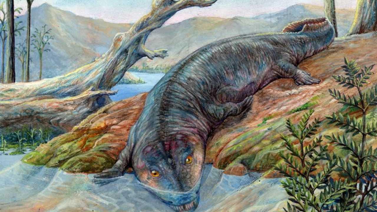 Ciri-ciri zaman Paleozoikum