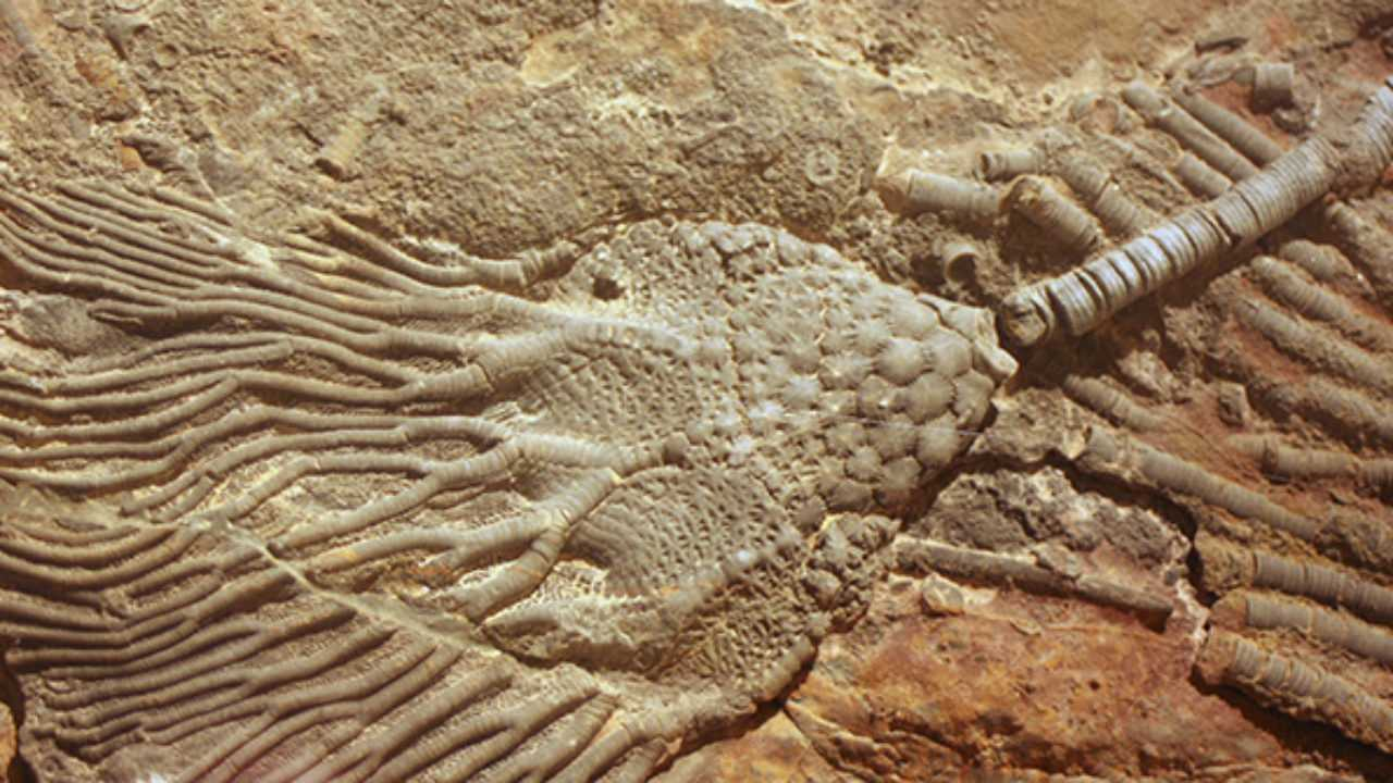 Peninggalan zaman paleozoikum