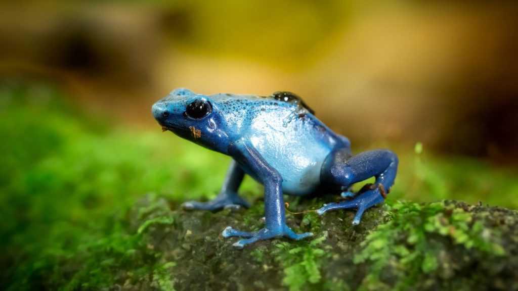 Aspek flora dan fauna membahas mengenai biodiversitas suatu wilayah tertentu