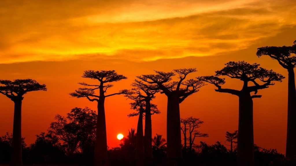 Madagaskar Merupakan Pulau Terbesar ke 4 di Dunia